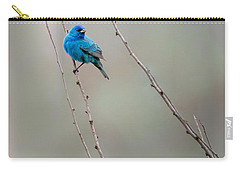 Indigo Bunting Carry-all Pouch by Bill Wakeley
