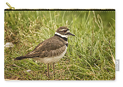 Killdeer Carry-all Pouch by Priscilla Burgers