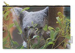 Koala Bear  Carry-all Pouch by Dan Sproul