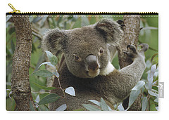 Koala Male In Eucalyptus Australia Carry-all Pouch by Gerry Ellis