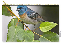 Lazuli Bunting 3a Carry-all Pouch by Sharon Talson