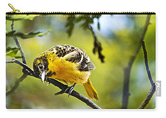 Musing Baltimore Oriole Carry-all Pouch by Christina Rollo