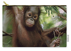 Orangutan Infant Hanging Borneo Carry-all Pouch by Konrad Wothe