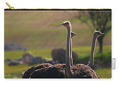 Ostriches Carry-all Pouch by Dan Sproul