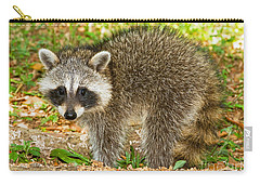 Raccoon Carry-all Pouch by Millard H Sharp