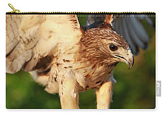 Red Tailed Hawk Hunting Carry-all Pouch by Dan Sproul