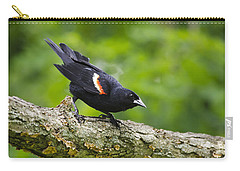 Red-winged Blackbird Carry-all Pouch by Christina Rollo