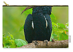 Silvery-cheeked Hornbill Perching Carry-all Pouch by Panoramic Images