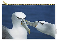White-capped Albatrosses Courting Carry-all Pouch by Tui De Roy