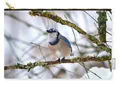 Winter Jay Carry-all Pouch by Deena Stoddard