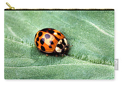 Asian Multicolored Lady Beetle Carry-all Pouch by Science Source