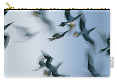 Blue-footed Booby Sula Nebouxii Flock Carry-all Pouch by Winfried Wisniewski