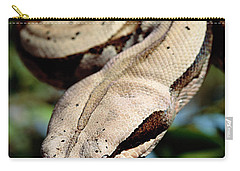 Boa Constrictor Boa Constrictor Carry-all Pouch by Claus Meyer