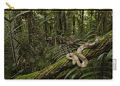 Boa Constrictor Boa Constrictor Coiled Carry-all Pouch by Pete Oxford