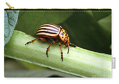 Colorado Potato Beetle Carry-all Pouch by Science Source