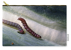 Diamondback Moth Larvae Carry-all Pouch by Science Source