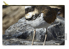 Killdeer Carry-all Pouch by Saija  Lehtonen