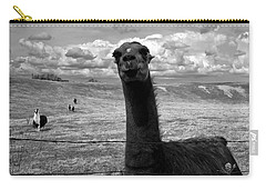 Llama Carry-all Pouch by Cale Best