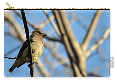 Cedar Wax Wing Carry-all Pouch by David Arment