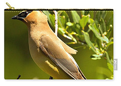 Cedar Waxwing Closeup Carry-all Pouch by Adam Jewell