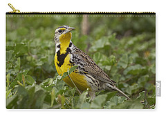 Western Meadowlark Carry-all Pouch by Doug Herr