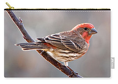 House Finch Carry-all Pouch by Betty LaRue