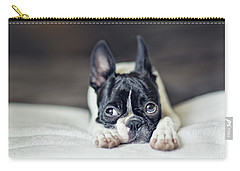 Boston Terrier Puppy Carry-all Pouch by Nailia Schwarz