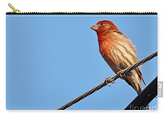 American Crossbill On Wire     Spring   Indiana   Carry-all Pouch by Rory Cubel