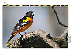 Baltimore Oriole Carry-all Pouch by Christina Rollo