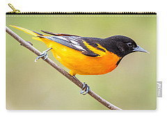 Baltimore Oriole Carry-all Pouch by Paul Freidlund