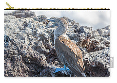 Blue Footed Booby Carry-all Pouch by Jess Kraft