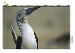 Blue-footed Booby Sula Nebouxii Carry-all Pouch by Tui De Roy