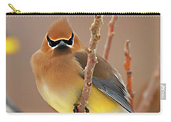 Cedar Wax Wing Carry-all Pouch by Carl Shaw