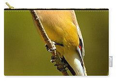 Cedar Waxwing Carry-all Pouch by Adam Jewell