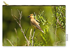 Cedar Waxwing At Glacier Carry-all Pouch by Adam Jewell