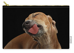 Closeup Cute Italian Greyhound Dog Licked With Pleasure Isolated Black Carry-all Pouch by Sergey Taran