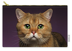 Closeup Golden British Cat With  Green Eyes On Purple  Carry-all Pouch by Sergey Taran