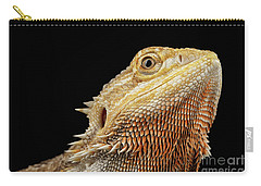 Closeup Head Of Bearded Dragon Llizard, Agama, Isolated Black Background Carry-all Pouch by Sergey Taran