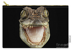 Closeup Head Of Young Cayman Crocodile , Reptile With Opened Mouth Isolated On Black Background, Fro Carry-all Pouch by Sergey Taran