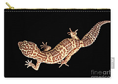 Closeup Leopard Gecko Eublepharis Macularius Isolated On Black Background Carry-all Pouch by Sergey Taran