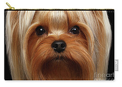 Closeup Portrait Yorkshire Terrier Dog On Black Carry-all Pouch by Sergey Taran