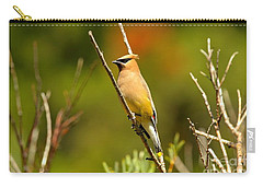 Fishercap Cedar Waxwing Carry-all Pouch by Adam Jewell