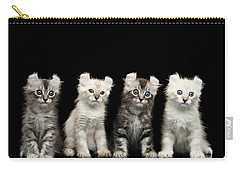Four American Curl Kittens With Twisted Ears Isolated Black Background Carry-all Pouch by Sergey Taran