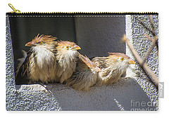 Four Stooges - Guira Cuckoos Carry-all Pouch by Gary Whitton