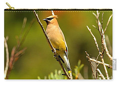 Glacier Cedar Waxwing Carry-all Pouch by Adam Jewell