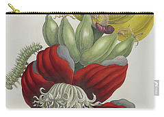 Inflorescence Of Banana, 1705 Carry-all Pouch by Maria Sibylla Graff Merian