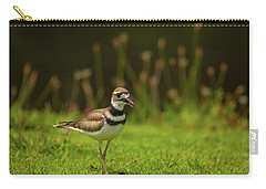 Killdeer Carry-all Pouch by Karol Livote
