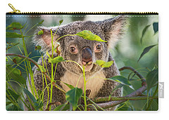 Koala Leaves Carry-all Pouch by Jamie Pham