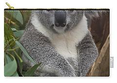 Koala Phascolarctos Cinereus Carry-all Pouch by Zssd