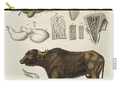 Medical Zoology Or Fair Presentation Carry-all Pouch by Brandt